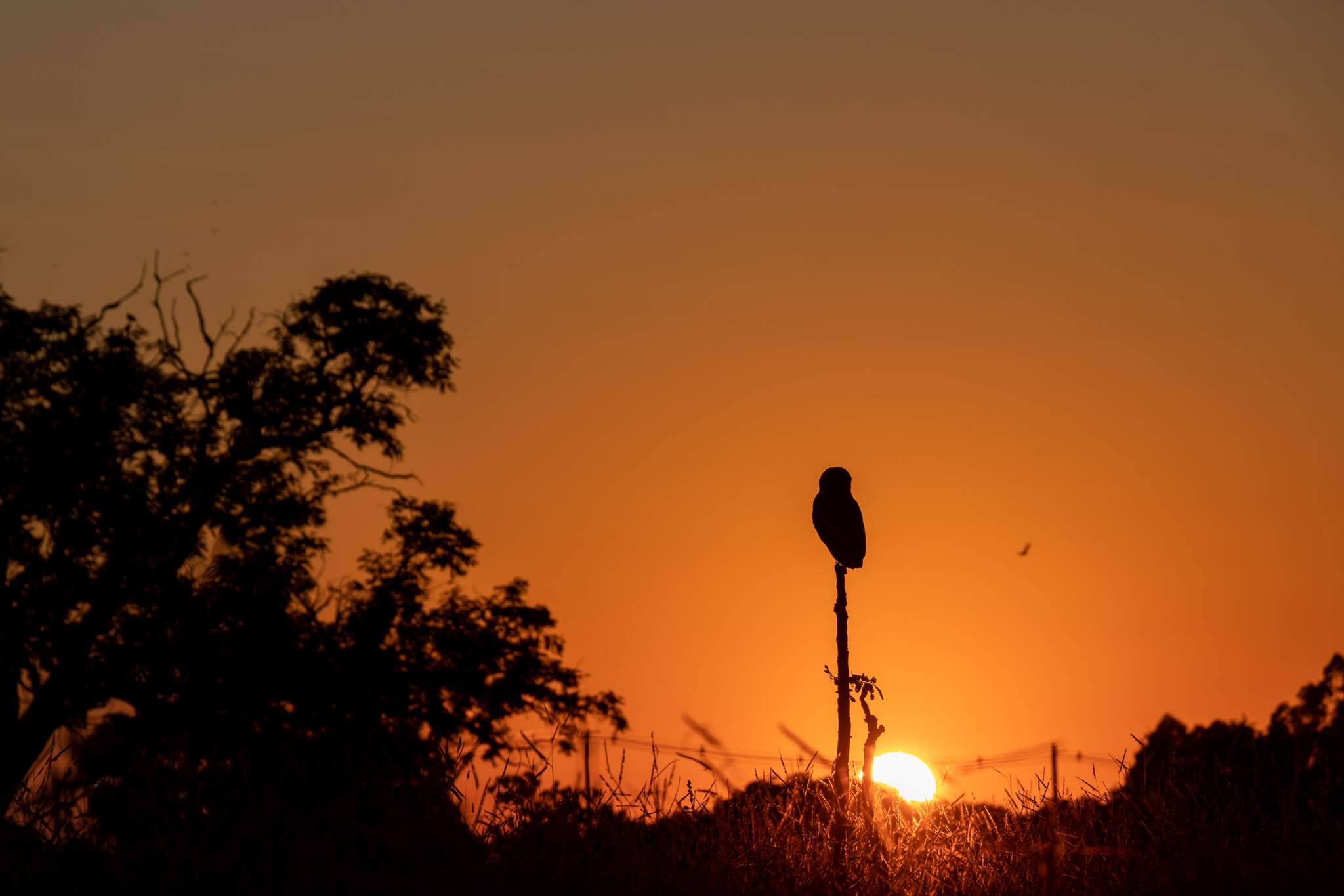 Na Capital dia amanheceu com sol forte e céu limpo (Foto: Henrique Kawaminami)