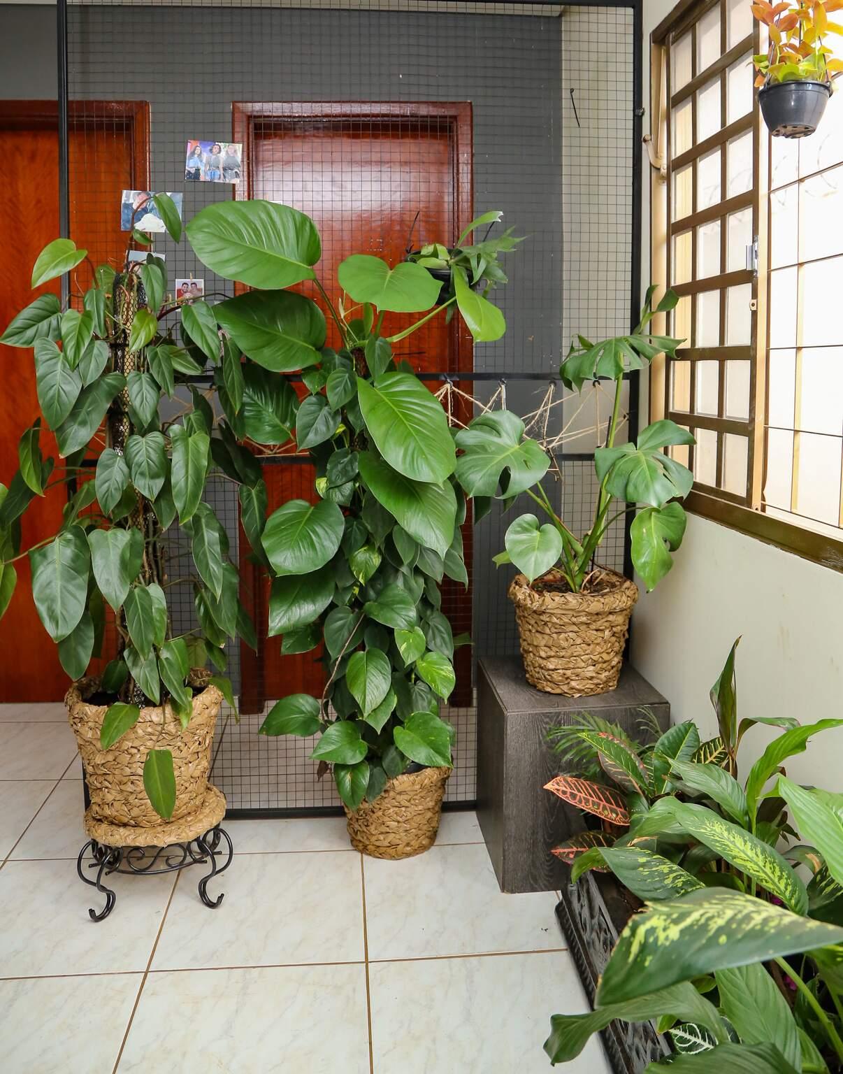 Cantinho da casa cheio de plantas. (Foto: Kísie Ainoã)