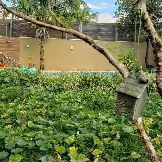 Nem estética de paisagismo impediu Danilo de ver jardim tomado por horta