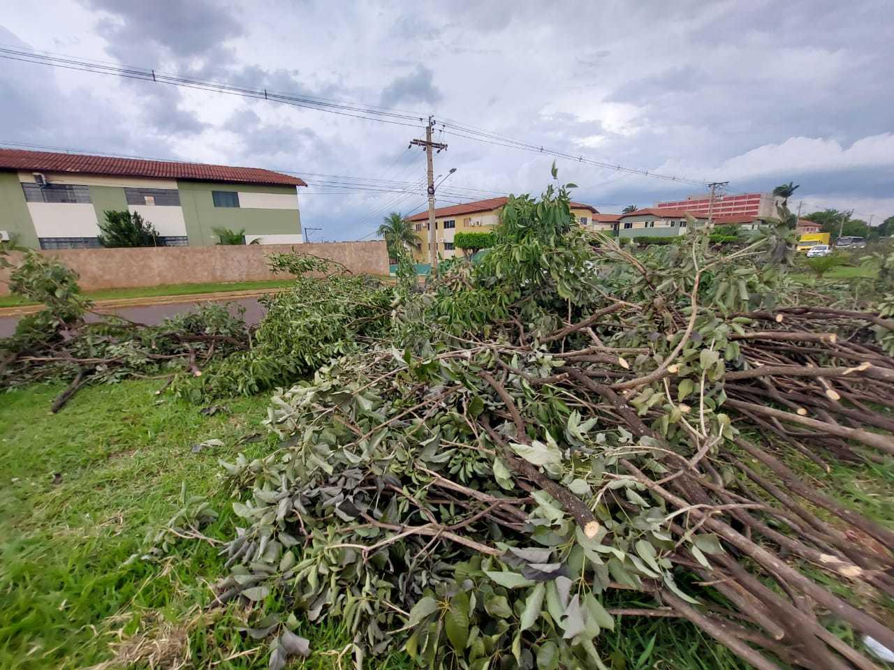 Árvores foram removidas do canteiro central da avenida (Foto: Aletheya Alves)