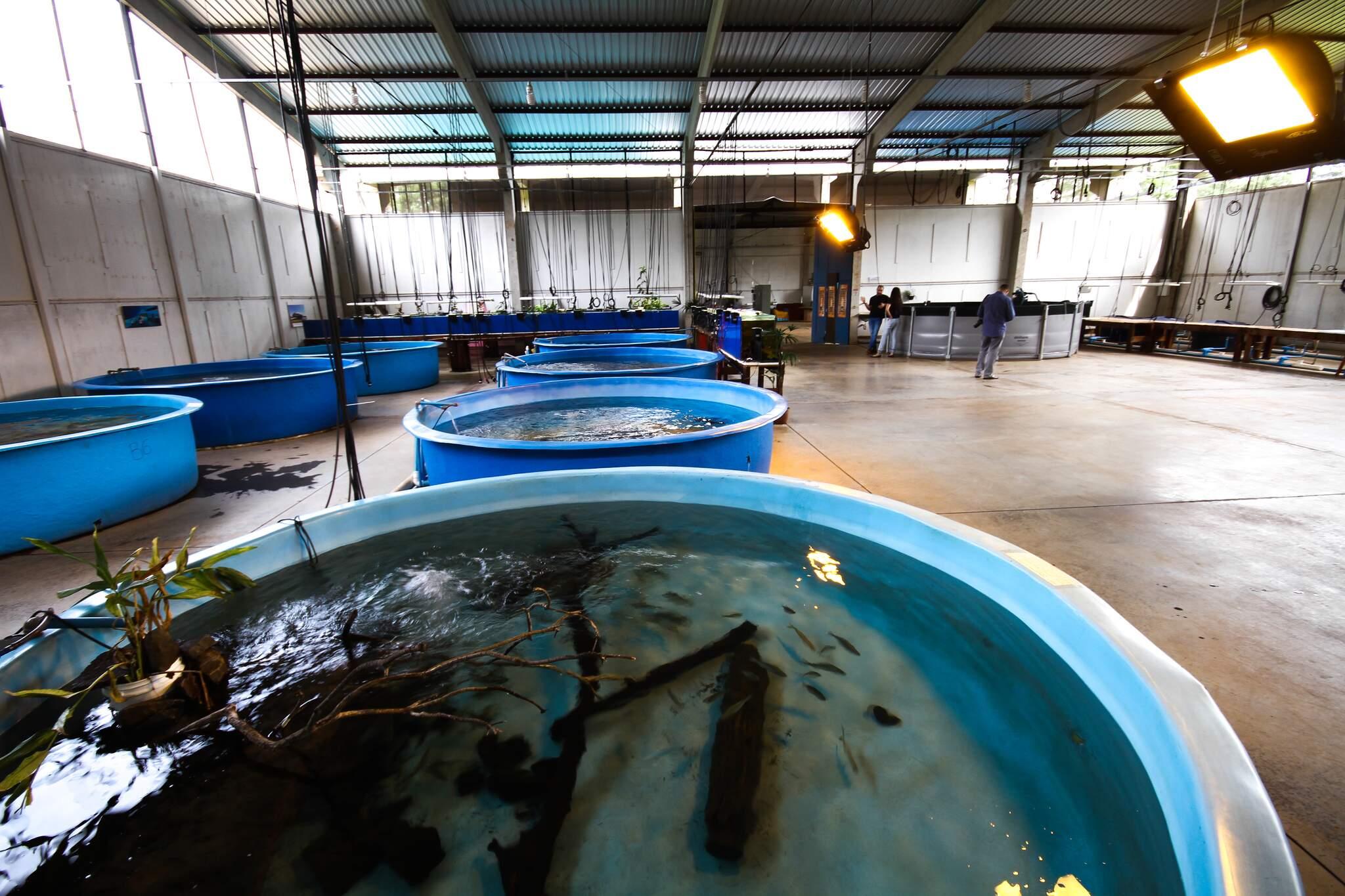 Tanques onde animais são mantidos. (Foto: Saul Schramm/Arquivo)
