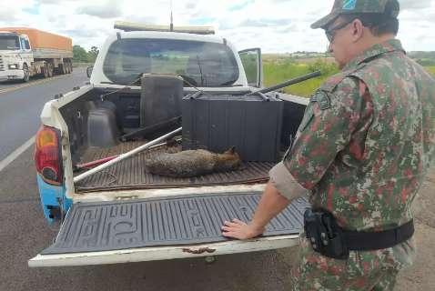 Cachorro-do-mato é resgatado em estado crítico após atropelamento na BR-163