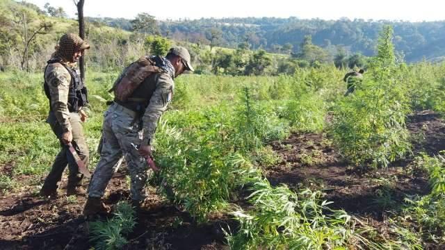 Em 8 dias, operação já destruiu 1,2 milhão de quilos de maconha na fronteira