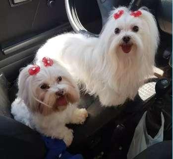 Transportes de pets salvam na hora de levar cão e gato pela cidade