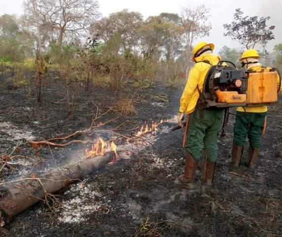 Fogo no Pantanal começou por ação humana em fazendas, diz estudo do MP