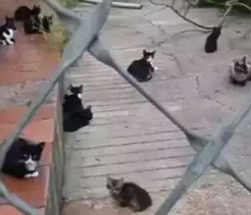 """Assembleia avalia """"clique-denúncia"""" de proteção a animais"""