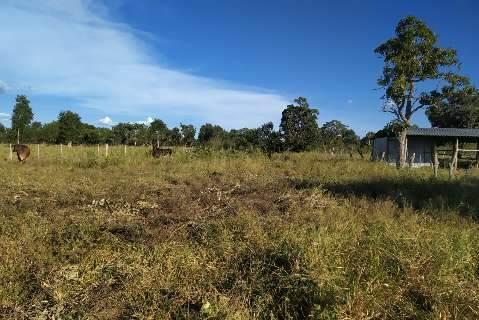 Fazendeiro é multado por desmatar vegetação nativa durante dois anos